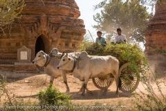 2015-03-03_095307_Myanmar_Bagan_IMG_1664_HeidiPodjavorsek.jpg