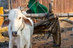 2015-03-03_172119_Myanmar_Bagan_IMG_2150_HeidiPodjavorsek.jpg