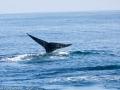 Whale_Watching_08354_2015-February-07_13102448.jpg
