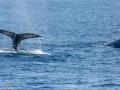 Whale_Watching_08566_2015-February-07_13440748.jpg