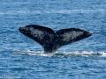 Whale_Watching_08619_2015-February-07_13483348.jpg